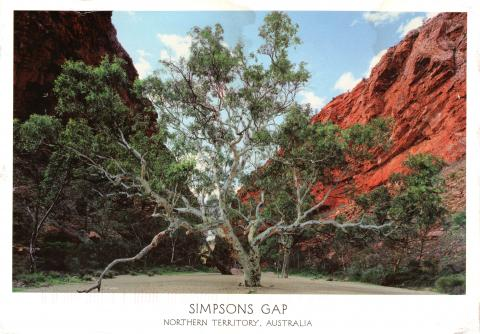Simpsons gap in Northern Territory of Australia. A big green tree stretching its branches outwards, surrounded by red mountains.