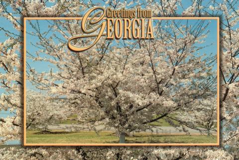 "A fruit tree in blossom period covered with white flowers. Over it is written ""Greetings from Georgia""."